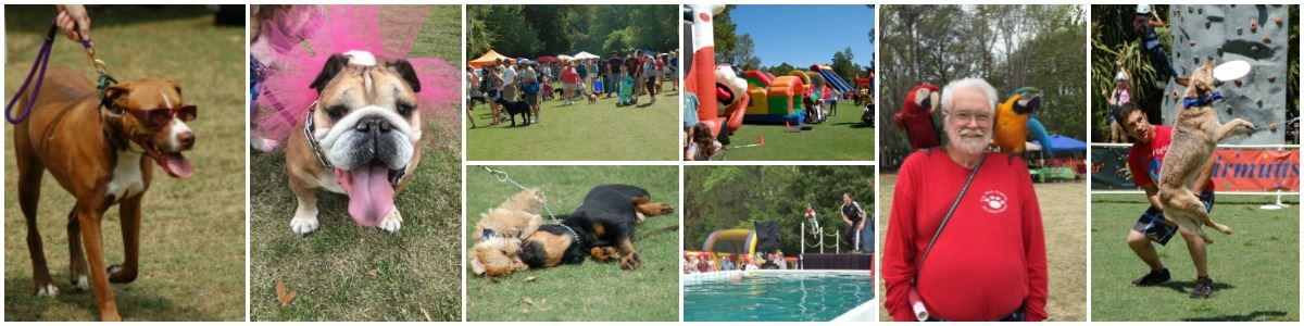 Pet Fest Collage