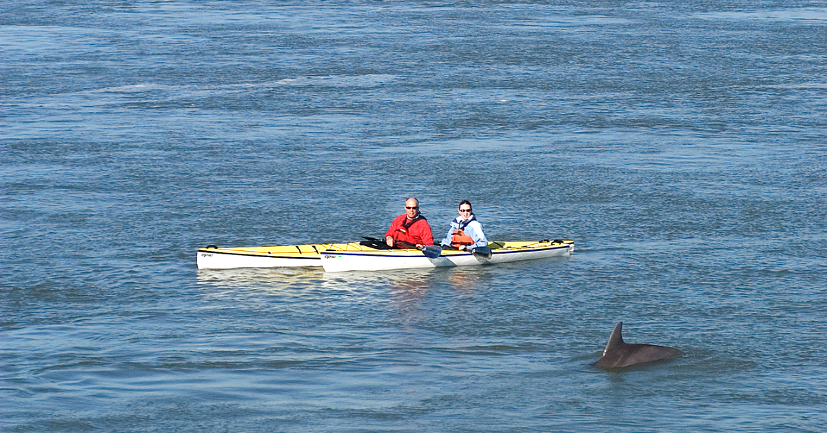 two kayakers on the water watching a dolphin surface