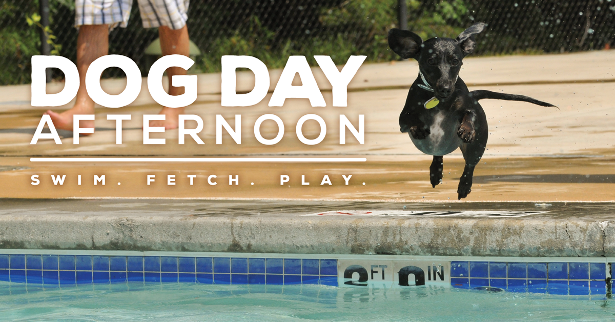 A dachshund dog jumping into the water on Dog Day Afternoon: Swim. Fetch. Play.