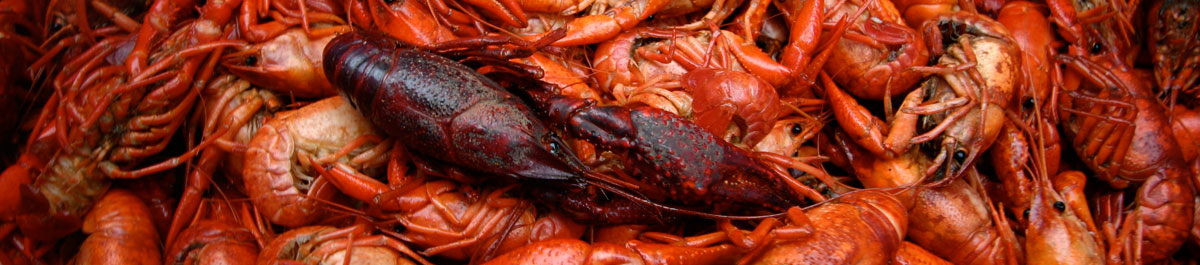 Crawfish at the Lowcountry Cajun Festival
