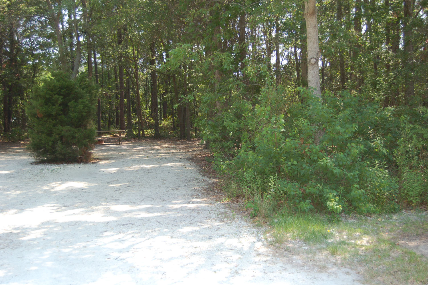 Image of Site #100 at the Campground at James Island County Park