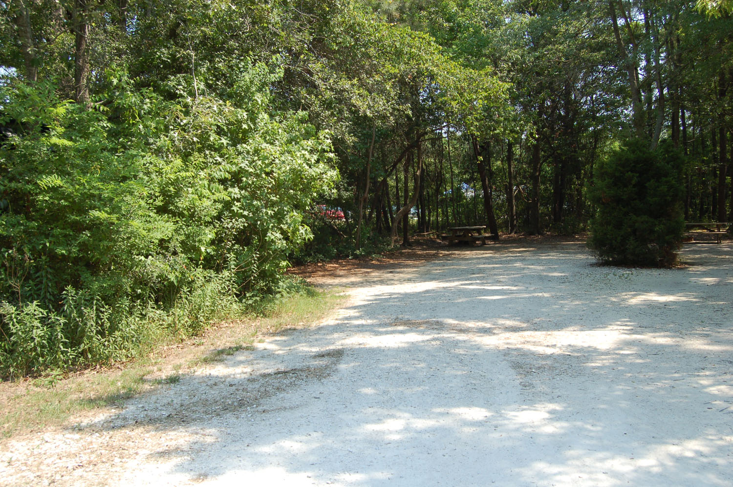 Image of Site #101 at the Campground at James Island County Park