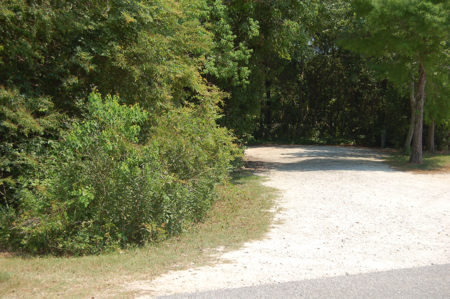 Image of Site #125  at the Campground at James Island County Park