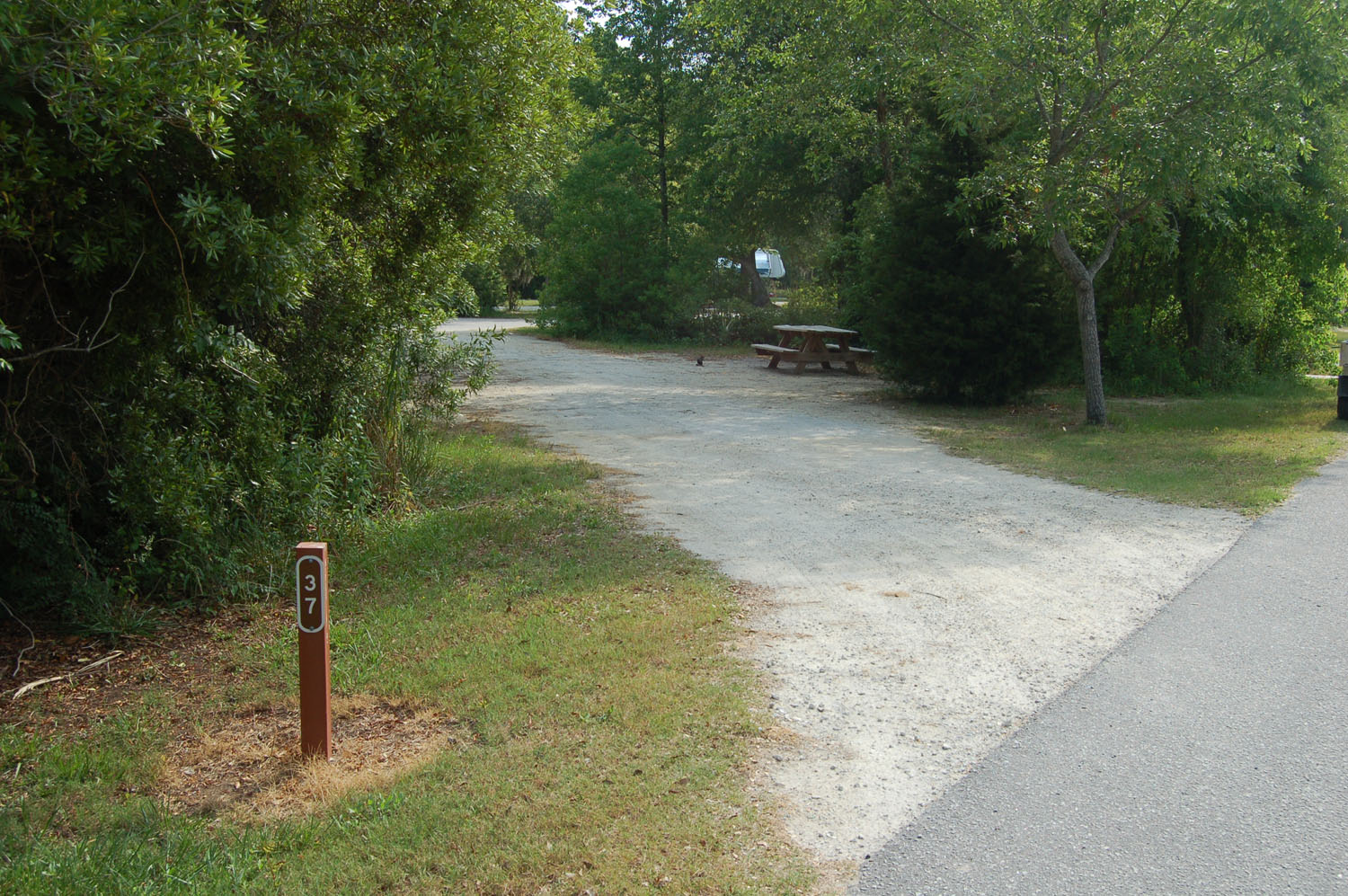 Image of campsite #37 at the Campground at James Island County Park