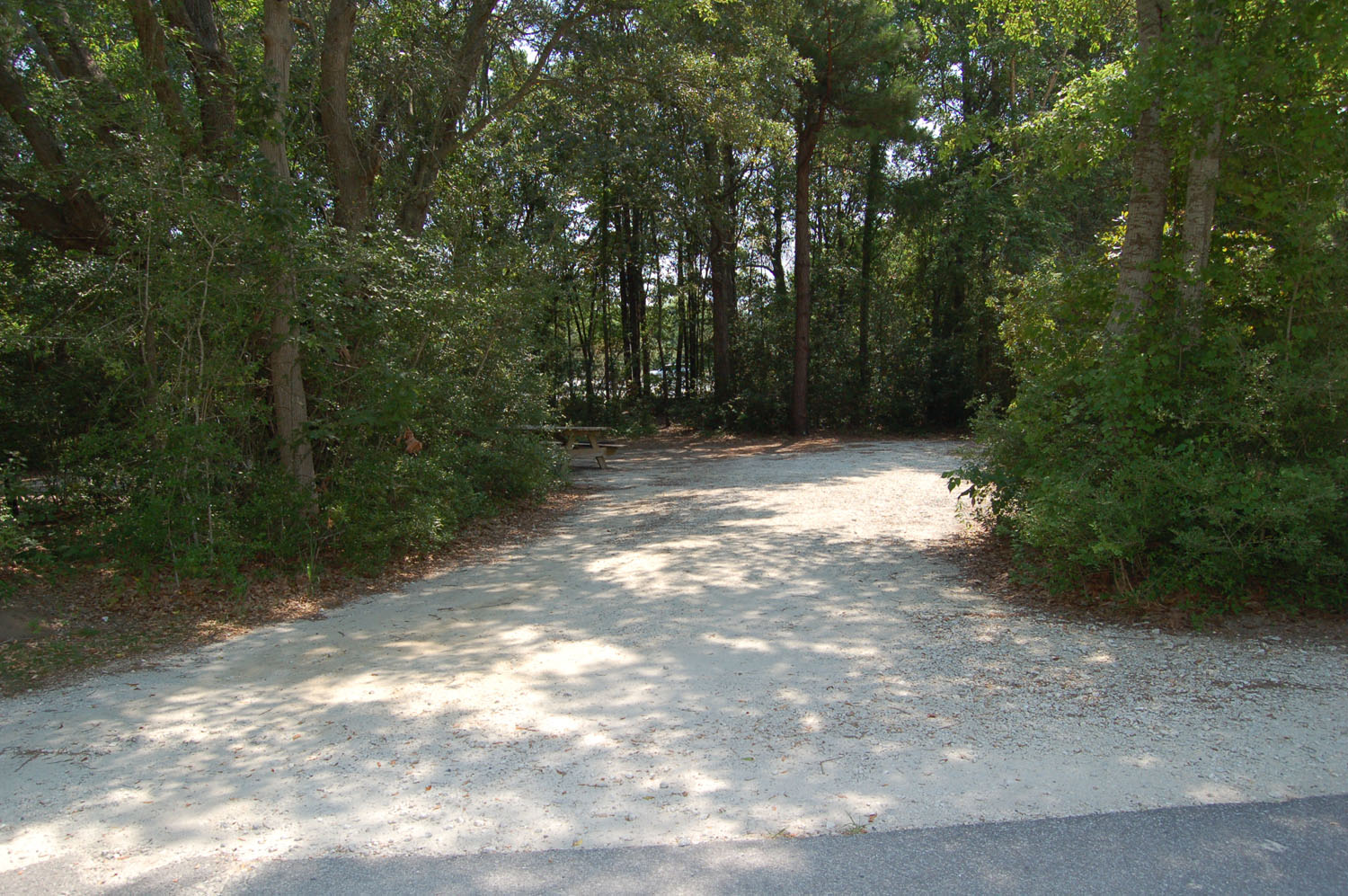 Image of Site #98  at the Campground at James Island County Park