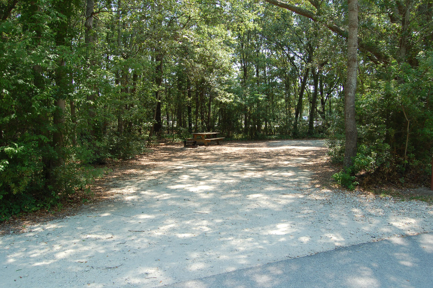 Image of Site #99 at the Campground at James Island County Park