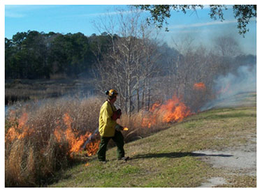 Image of a controlled burn at Caw Caw Interpretive Center